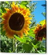 Sunflower 102 Canvas Print