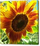 Sunflower 104 Canvas Print
