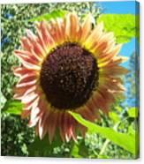 Sunflower 107 Canvas Print