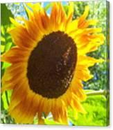 Sunflower 118 Canvas Print