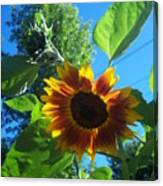 Sunflower 120 Canvas Print