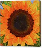 Sunflower 12118-3 Canvas Print