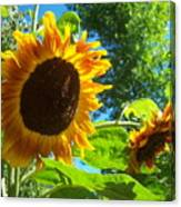 Sunflower 123 Canvas Print
