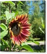 Sunflower 124 Canvas Print