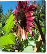 Sunflower 127 Canvas Print