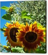 Sunflower 132 Canvas Print