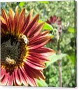 Sunflower 135 Canvas Print