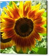 Sunflower 140 Canvas Print