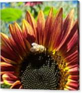Sunflower 146 Canvas Print