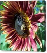 Sunflower 147 Canvas Print