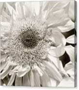 Sunflower 4 Canvas Print