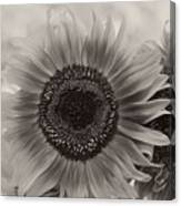 Sunflower 6 Canvas Print