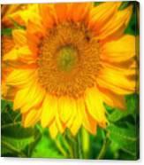 Sunflower 8 Canvas Print