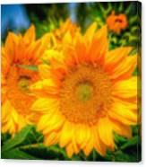 Sunflower 9 Canvas Print