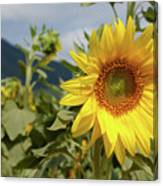 Sunflower And Peaks Of Otter Canvas Print