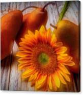 Sunflower And Pears Canvas Print