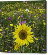 Sunflower And Wildflowers Canvas Print