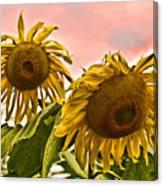 Sunflower Art 1 Canvas Print