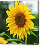 Sunflower Art 3 Canvas Print