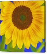 Sunflower Art Canvas Print