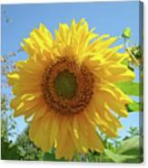 Sunflower Art Prints Sun Flower 2 Giclee Prints Baslee Troutman Canvas Print