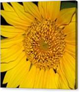 Sunflower At Dusk Canvas Print