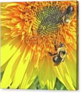 Sunflower Bees Canvas Print