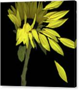 Sunflower Breeze Canvas Print