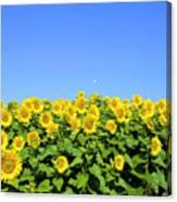 Sunflower City Canvas Print
