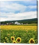 Sunflower Country Landscape  Canvas Print