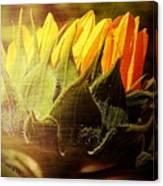 Sunflower Crown Canvas Print