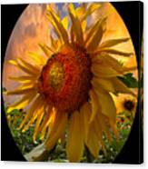 Sunflower Dawn In Oval Canvas Print