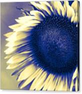 Sunflower Sunrise Canvas Print