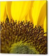Sunflower Detail Canvas Print