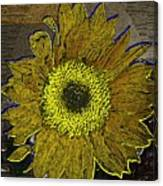 Sunflower Dreaming Canvas Print