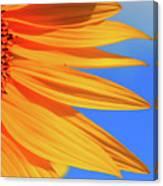 Sunflower Elegance Canvas Print