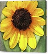 Sunflower Expressed Canvas Print
