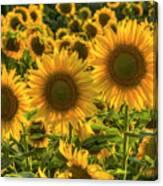 Sunflower Family Canvas Print