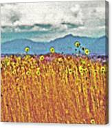 Sunflower Field 1 Canvas Print