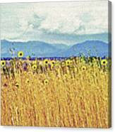 Sunflower Field 2 Canvas Print