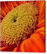 Sunflower Fire 1 Canvas Print