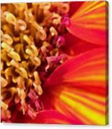 Sunflower Fire 4 Canvas Print