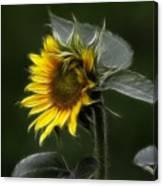 Sunflower Fractalius Beauty Canvas Print