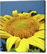 Sunflower Garden Art Print Yellow Summer Sun Flower Baslee Canvas Print