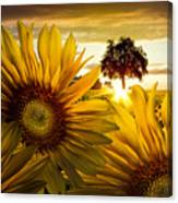 Sunflower Heaven Canvas Print