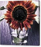 Sunflower In A Cup Canvas Print