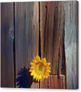 Sunflower In Barn Wood Canvas Print