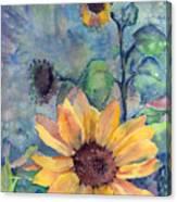 Sunflower In Bloom Canvas Print