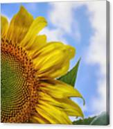 Sunflower In The Clouds Canvas Print