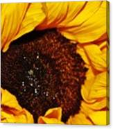 Sunflower In The Sun Canvas Print